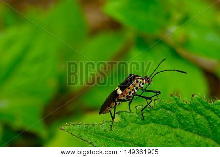 Insect in the Morning, posing on a leaf