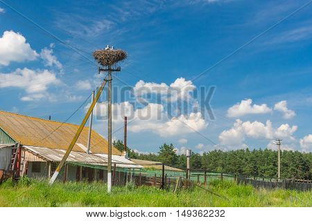 Country landscape with stork nest on an electricity pole in central Ukraine