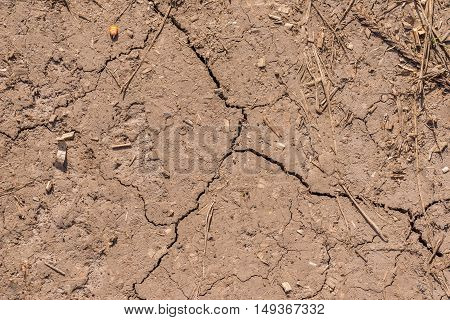 Cracked Soil Of Dry Corn Field