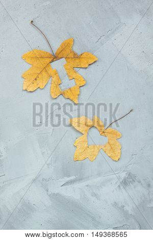 Lettering i love on maple leaves on a concrete background. Vertical orientation.