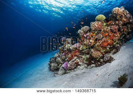 Underwater shot of the sea sandy bottom and vivid coral reef. Red Sea, Egypt