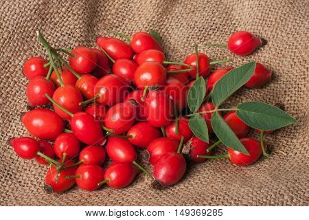 Fresh rosehip berries with green leaf on sacking.