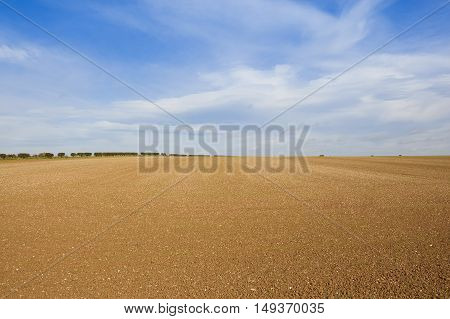 Cultivated Chalky Field
