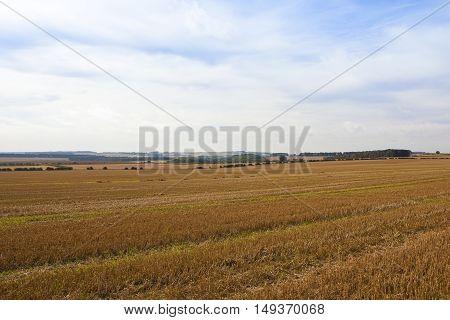 Warm Autumn Landscape