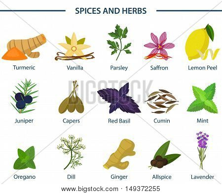 Set of icons of seasoning or spice on plates. Turmeric or tumeric, flat-leaved vanilla, orchid and parsley, saffron and lemon peel, juniper and capers, basil and cumin, mint and oregano, asian dill