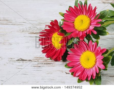 Aster flowers composition on the wooden background