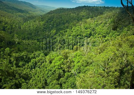 Subtropical rainforrest in Springbrook national park Gold Coast Queensland Australia