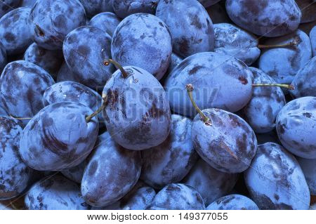 Close up of a bunch of fresh plums.