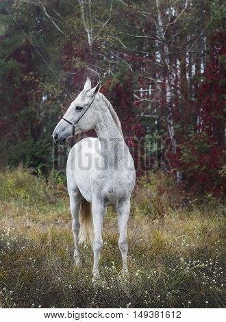 gray horse standing in the forest on the green grass near the trees