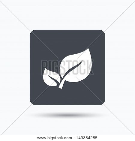 Leaf icon. Fresh organic product symbol. Gray square button with flat web icon. Vector