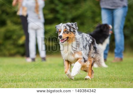 Dog Running On The Meadow