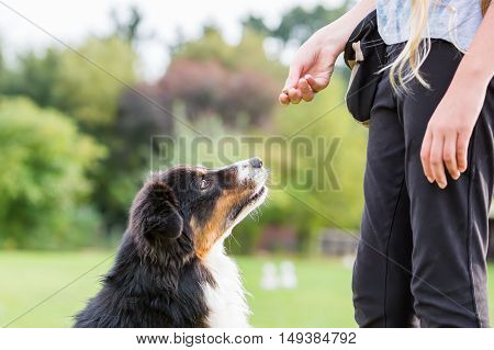 Girl Gives A Dog A Treat