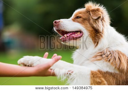 Dog Gives A Girl The Paw