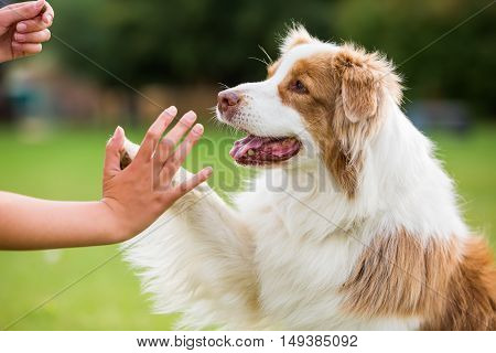 Girl Gives A Dog High Five