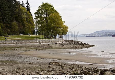 Stanley Park, Vancouver, BC - April 21, 2015 - distant view of the Lions Gate Bridge and cargo ships, from seawall at Stanley Park overlooking the low tide shoreline on a bright slightly overcast day.