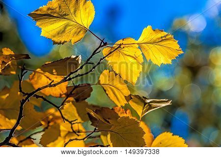 Close up of autumn leaves in Cannon Hill Park in Spokane Washington.