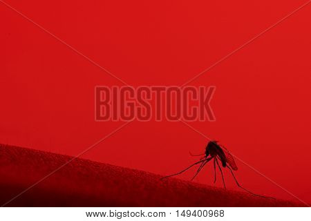 Close Up Of Mosquito