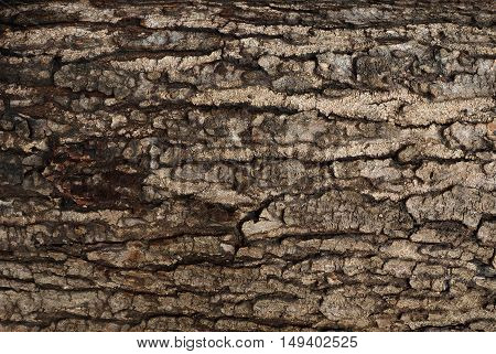 Wood texture The bark of the tree Still not completely dry.