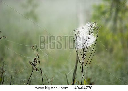 spider web in morning meadow with dew drops.