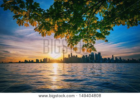 Toronto skyline at sunset with maple tree branches