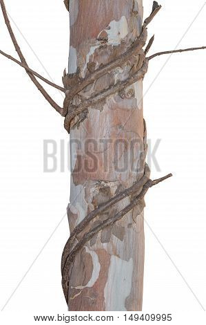 tree and Vine Branch on white background