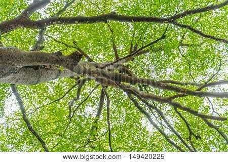 Forest trees in city