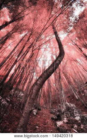 Into the Infrared forest. Nature composition.