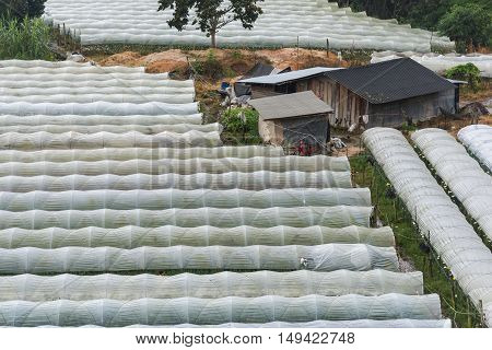 Aerial view of greenhouse farming and agriculture Chiang Mai ,Thailand.