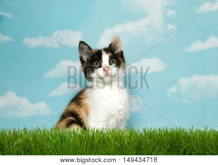 Adorable Calico kitten sitting in grass looking up blue background sky with white clouds. Copy space