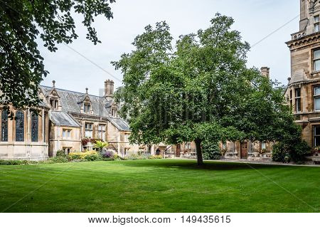 CAMBRIDGE UK - AUGUST 11 2015: Court with big trees in the Gonville & Caius College in the University of Cambridge. Cambridge is a university city and one of the top five universities in the world.