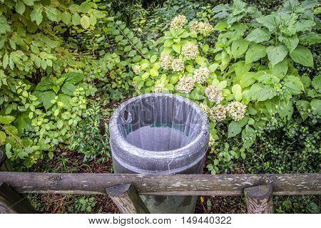 Vegetation In Jardin Des Plantes Garden Public Park In Toulouse
