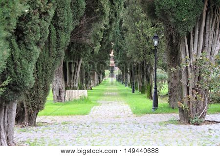 Tree lined road with lamps in a park