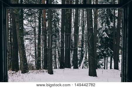 View on winter forest from old abandoned house