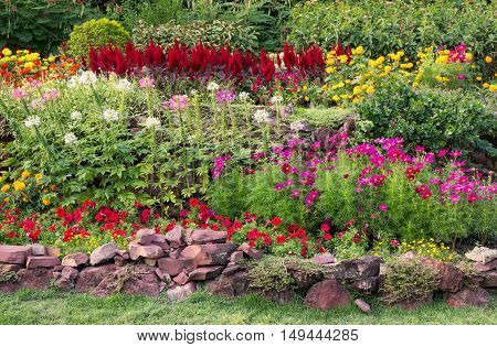 colorful blooming flower in the garden outdoor