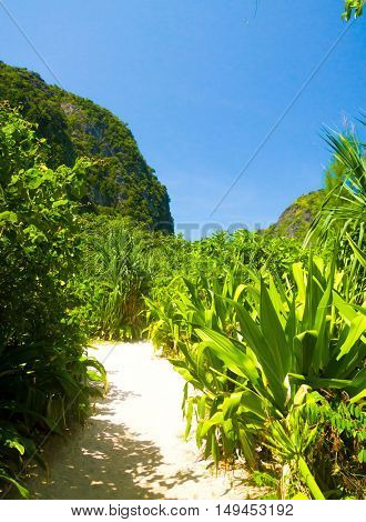 Hiking Path Exotic Garden