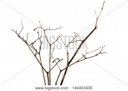 Front Shot Of Twigs Of Dry Dead Plant