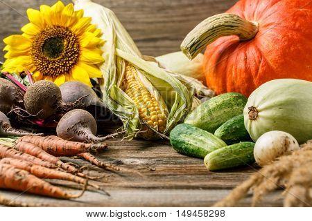 autumn harvest in rustic