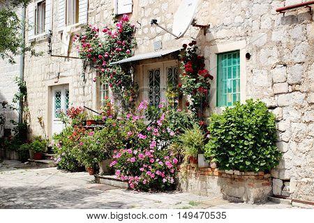 Flowers In Perast