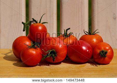 Fresh mature tomatoes gathered in a kitchen garden