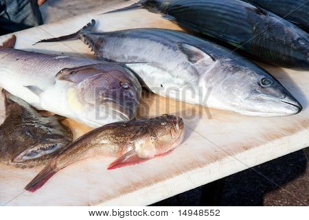 Mediterranean fishes on the market