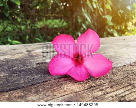 pink flower on old wooden with nature background