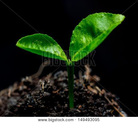 Small green plants. Isolate on black background