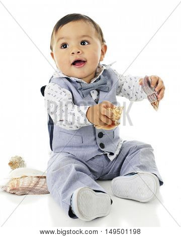 An adorable, dressed up baby boy happily playing with a variety of sea shells.  On a white background.
