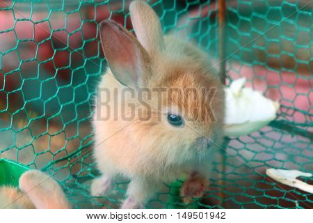 lovely cute caged baby white and red rabbits
