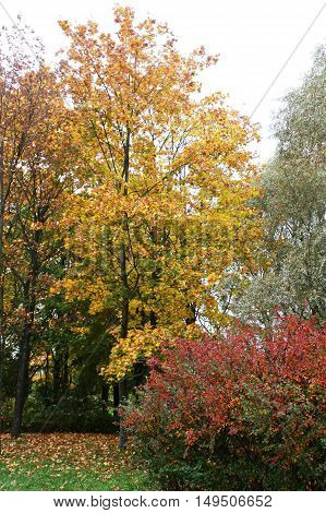 Yellow and red trees in autumn city Park