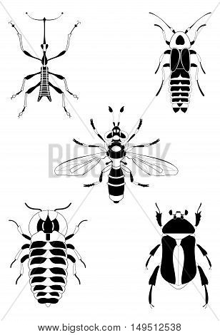 Art insect illustration set. Decor insect illustration collection for design