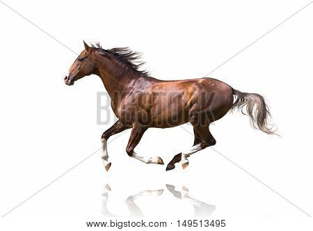Red galloping horse isolated on white background
