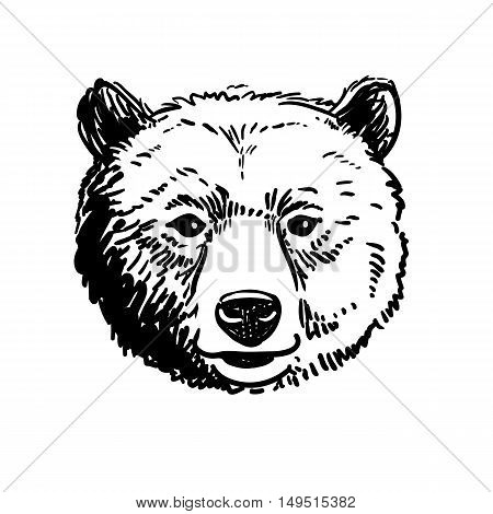Vector pen and ink hand drawn illustration of a bear head portrait facing forward. Retro vintage style sketch nature wildlife design element for web and print isolated on white background.
