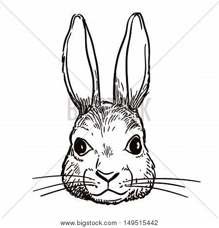 Vector hand-drawn pen and ink black and white sketch character illustration of a bunny rabbit head portrait. Realistic vintage retro style hare face design element. Nature wildlife woodland theme art