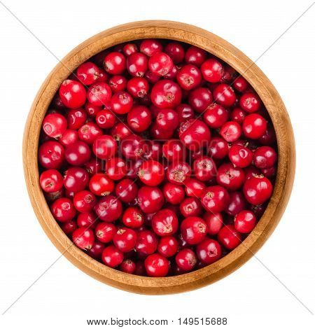 Lingonberries in a wooden bowl on white background. Red ripe fruits of Vaccinium vitis-idaea, also partridgeberry or cowberry. In the wild collected berries are used for jam. Isolated macro photo.
